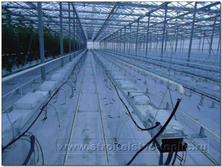 Отделение выращивания светокультуры огурца
