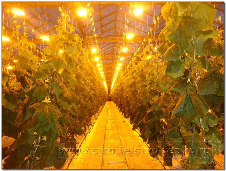 Освещения для выращивание огурцов в 611