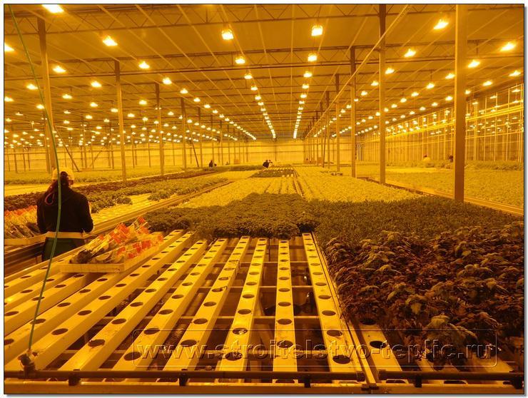 Выращивание зимой картофеля в теплице 63