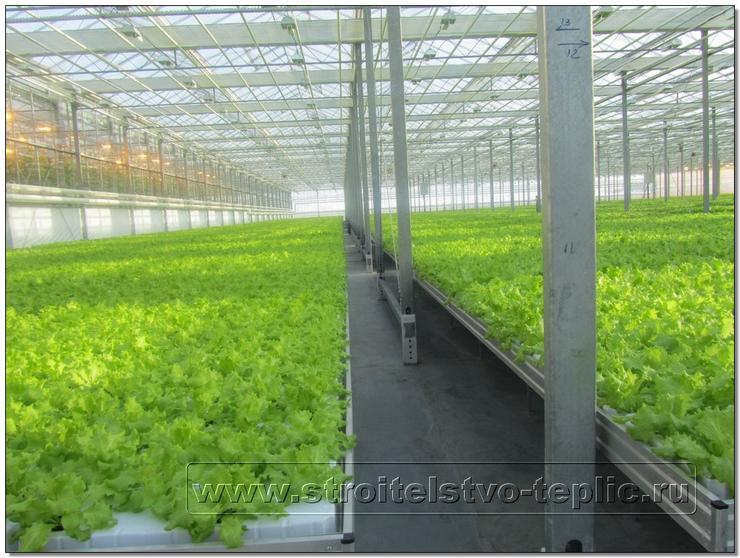 Рассадно-салатное отделение