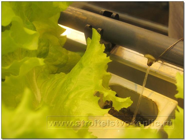 Проточная технология выращивания растений