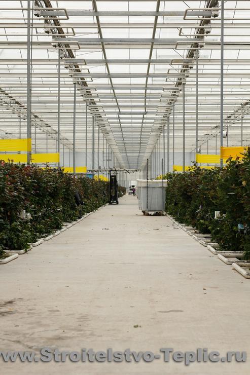 Производственное отделение для выращивания роз