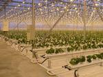 Система досвечивания: Электродосвечивание растений в промышленных теплицах